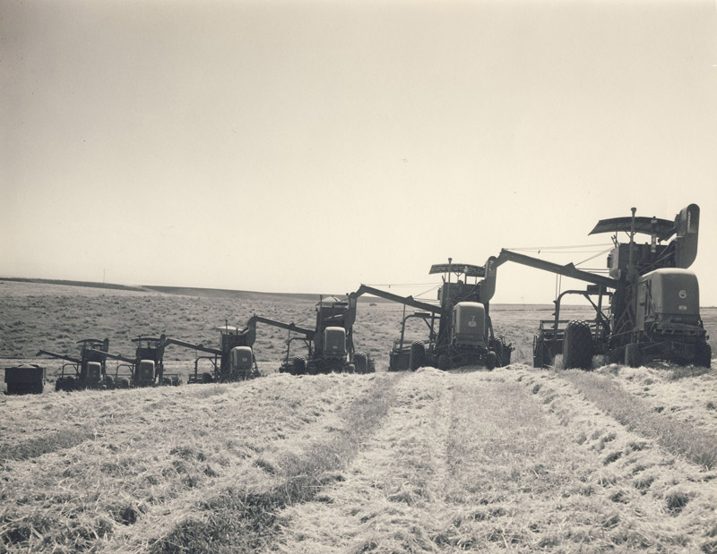 Wheat Harvest 1946